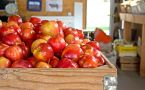 Wooden bin of red apples in market aisle.
