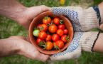 Close up of one person handing bowl of cherry tomatoes to another