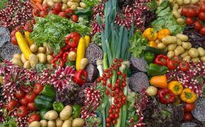 Large variety of vegetables laid out on table