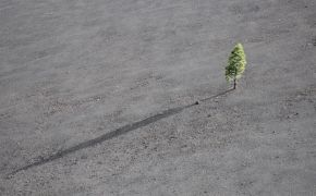Single tall tree on gray land, casting long shadow