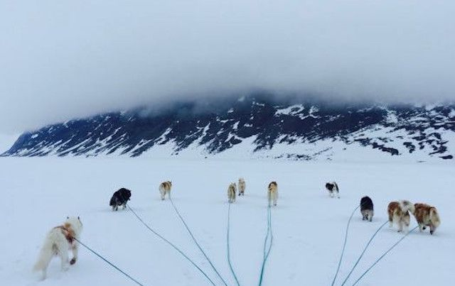 Musher's view of sled dogs out on the line, ready to pull
