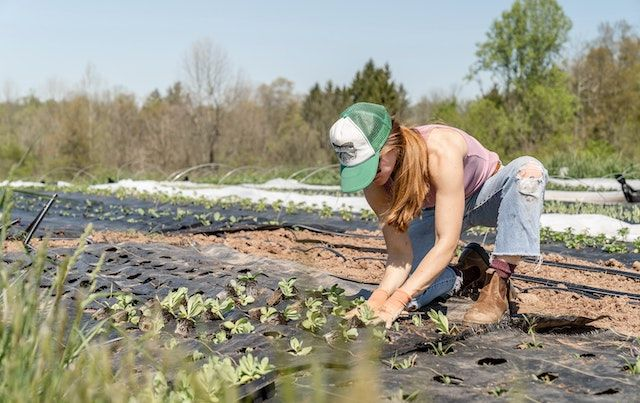 Woman working with seedlings on a farm