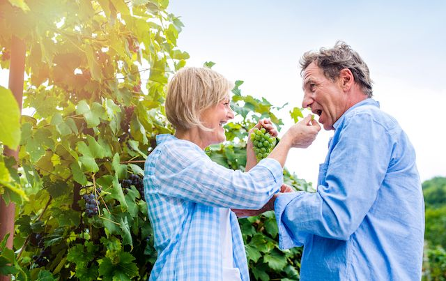 Woman feeding a man grapes in a vineyard.