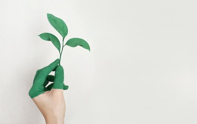 A hand covered in green paint holding green plant cutting