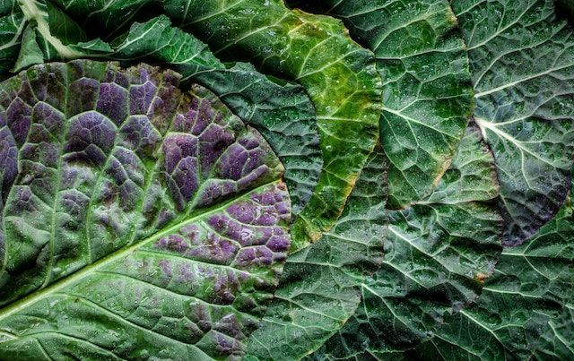 Leaves of kale stacked