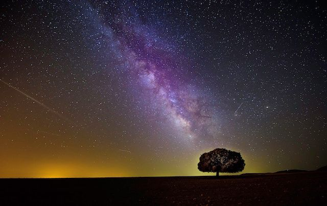 Milky Way galaxy over silhouetted tree in night sky