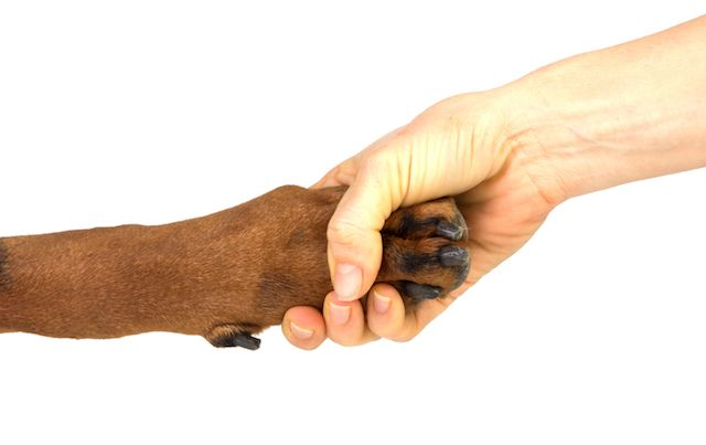 Human hand shaking dog's paw