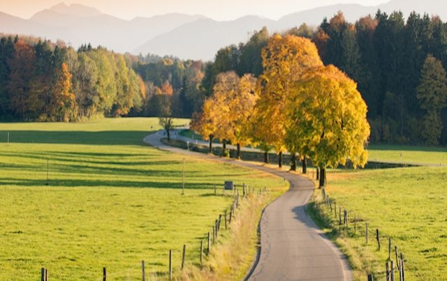 pastoral country road winding through autumn trees