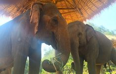 elephants in Thai sanctuary