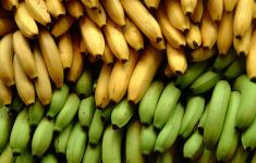 green and yellow bananas stacked