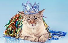 Annoyed cat wearing paper crown and ribbons.