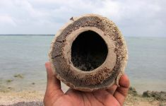 coconut with large hole drilled out, held up in front of surf