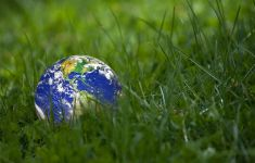 Globe nestled in green grass.