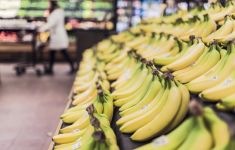rows of bananas in grocery store