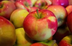 large group of organic healthy apples