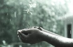 hands holding plant sapling in the rain