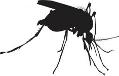 Black and white graphic of biting mosquito