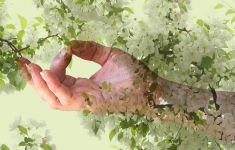 mudra hand gesture with white flowers
