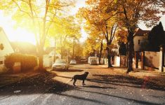 Golden sunlit neighborhood with dog in street.