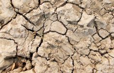Surface texture of dried cracked mud