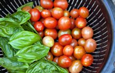 Black colander filled with cherry tomatoes and basil.
