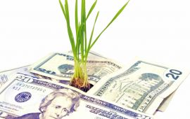 money tree - plant growing out of 20 dollar bills