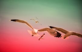 sea gulls in red sky