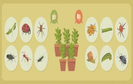 infographic about garden pests and bugs