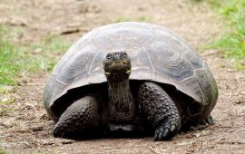 Tortoise stretches its neck to look right at the camera